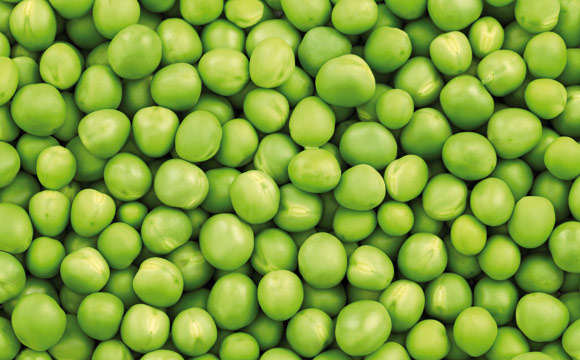 Grüne Erbsen<br /> sind die Hauptzutat für Erbsensuppe. Sie kochen mehlig. Die Farbe (grün oder gelb) sagt nichts über die Qualität der Ware aus.