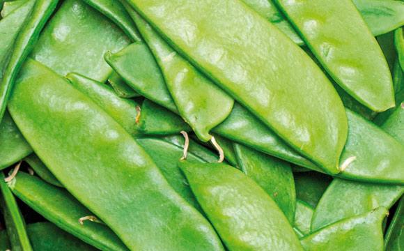Zuckerschoten<br /> oder Kaiserschoten werden frisch mit Schale gegessen. Die Erbsen liegen in der schmackhaften, süßen Hülle. Eine Gemüsebeilage.