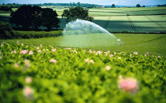 Bewässerungssysteme helfen je nach Bondart über Trockenzeiten hinweg.
