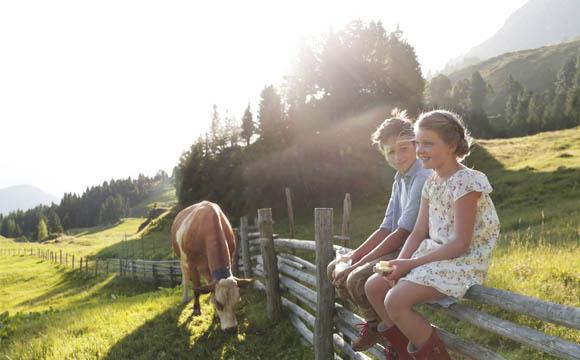 Wo die Kühe friedlich grasen