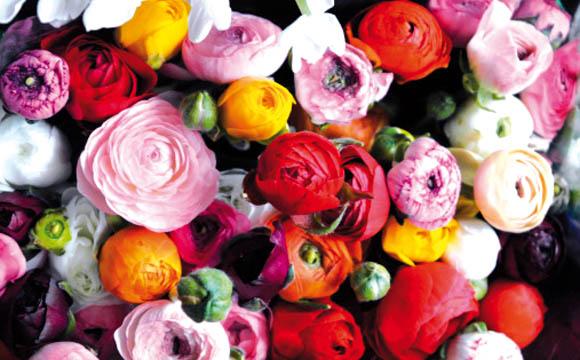 Ranunkel: Sie sind die Stars in der Frühlingsvase. Die prall gefüllten Blüten kommen mit zarten Begleiterinnen wie den Blüten des Frauenmantels gut zur Geltung.