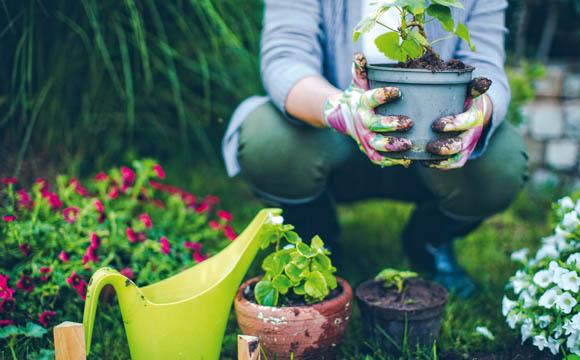 Corona-Effekt: Bau- und Gartenfachmärkte boomen