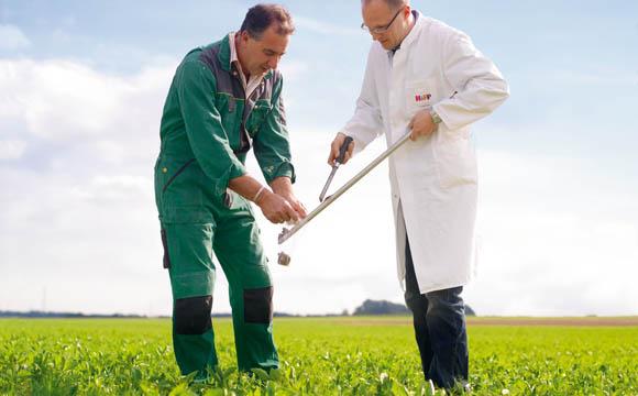 Auf Gemüsefeldern werden regelmäßig Bodenproben genommen.