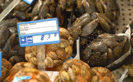 Muscheln in Hülle und Fülle