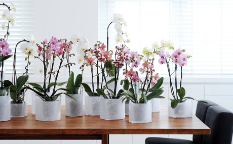 anspruchsvolles sortiment zimmerpflanzen lebensmittel. Black Bedroom Furniture Sets. Home Design Ideas
