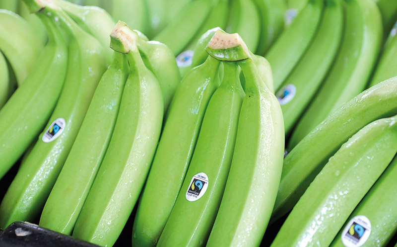 Wieder Bananen ohne Fairtrade-Siegel
