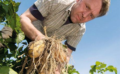 Kartoffelbauer Torsten Jacobs gehört zu den angestammten Gemüse-Lieferanten von Coop. (Bildquelle: Coop)