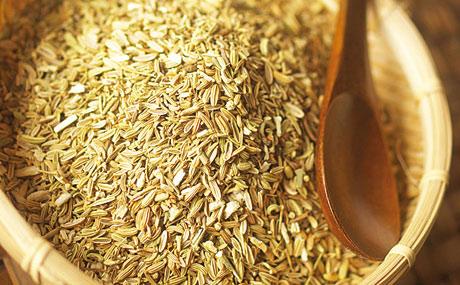 Fenchelsamen: Geschmack und Geruch von Fenchelsamen sind süßlich-anisartig. Sie werden häufig in Brot- und Backwaren sowie Wurstwaren verwendet und sind Bestandteil vieler exotischer Gewürzmischungen. (Bildquelle: fotolia)