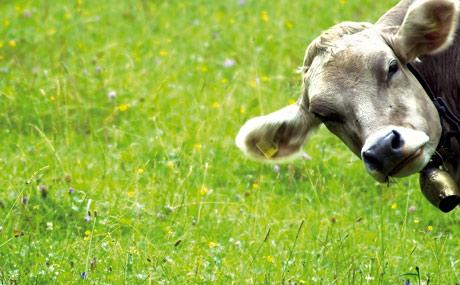 Die Unterschiede zu konventionell produziertem Fleisch und ebenso produzierter Wurst liegen vor allem in der Tierhaltung und in der Verarbeitung des Fleisches.