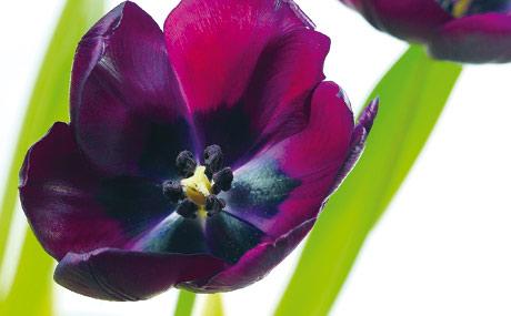 attraktiver blickfang schnittblumen lebensmittel praxis. Black Bedroom Furniture Sets. Home Design Ideas
