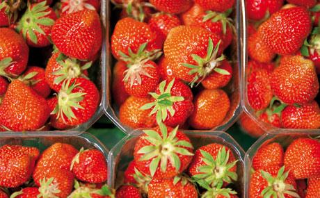 Landgard: Eröffnet deutsche Erdbeersaison