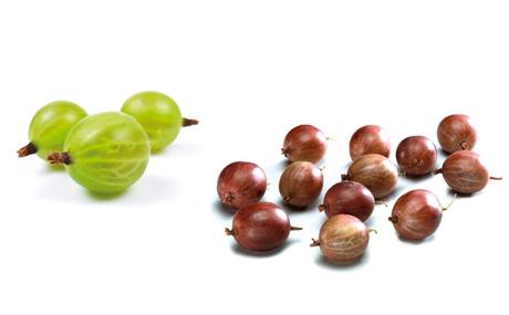 Stachelbeeren: Die einzige Beerenart, die auch grün und unreif gepflückt wird, weil sie dann weniger empfindlich und etwas länger lagerfähig ist. Für den Frischverzehr aber eignen sich die rot gefärbten Beeren. Je nach Sorte haben sie eine glatte oder behaarte, feine oder feste Schale. (Bildquelle: Agrarmarkt Informations-Gesellschaft mbH (AMI)/Pressebüro deutsches Obst und Gemüse)