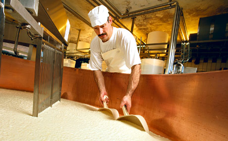 Durch das Rühren mit der Käseharfe werden die festen von den flüssigen Bestandteilen getrennt, es entstehen die Käsekörner.