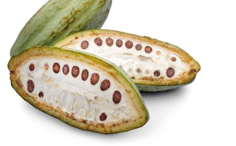 Rund 80 Kakaobohnen benötigt man fu?r eine 100-g-Tafel Schokolade, abhängig von der Sorte.