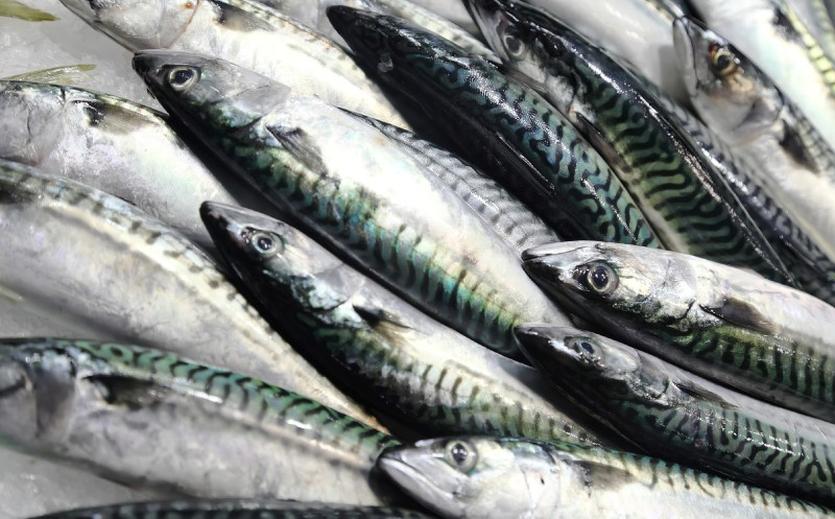 Vorläufige Fangquoten beschlossen