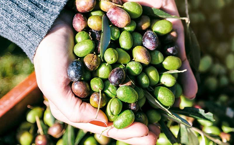 Parmesan, Fleisch, Oliven: USA drohen EU mit weiteren Strafzöllen
