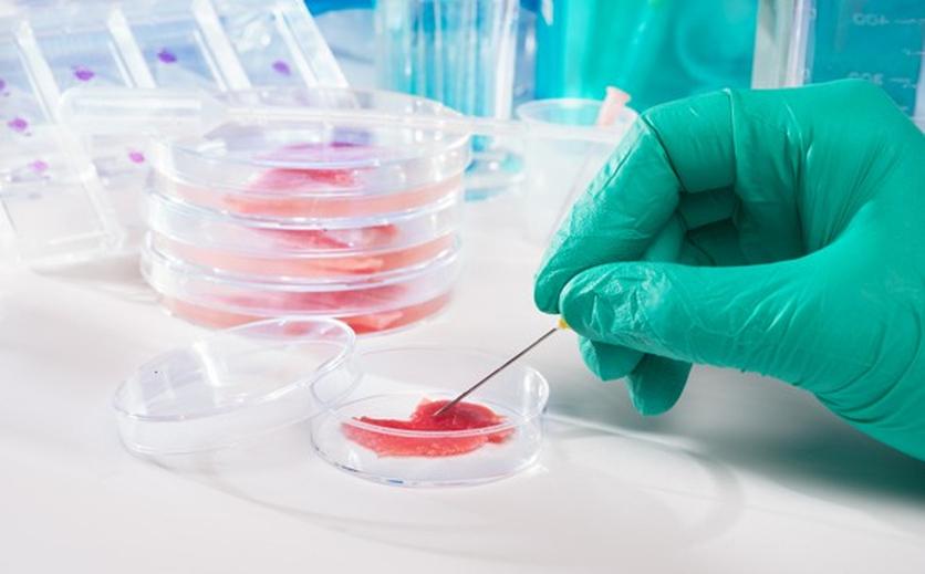 Annäherung an Fleisch aus dem Labor