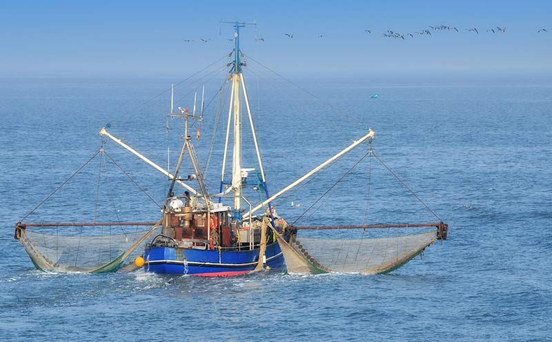 Fischerei: EU-Minister beschließen niedrigere Fangquoten für Ostsee