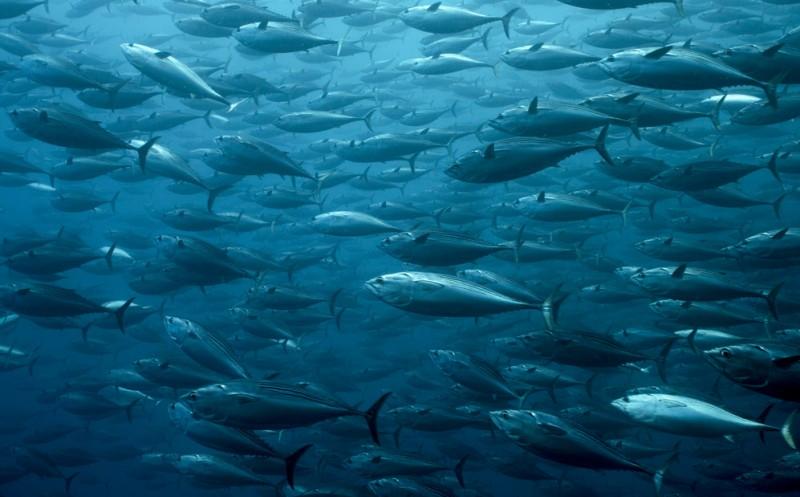 Gründet Initiative für Aquakultur