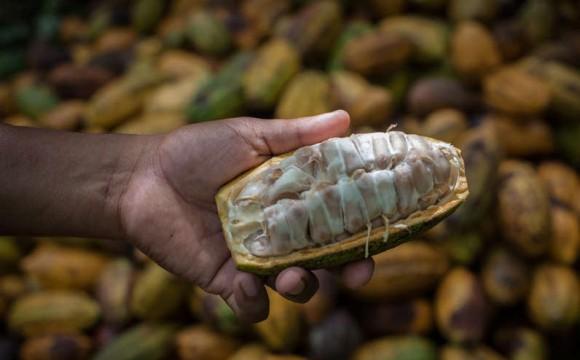 BDSI: Immer mehr Süßwaren mit nachhaltigem Kakao