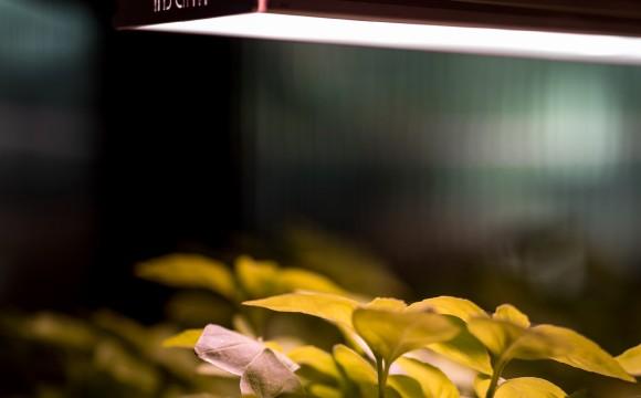 Edeka Minden:Erfolgreicher Test mit indoor-farming