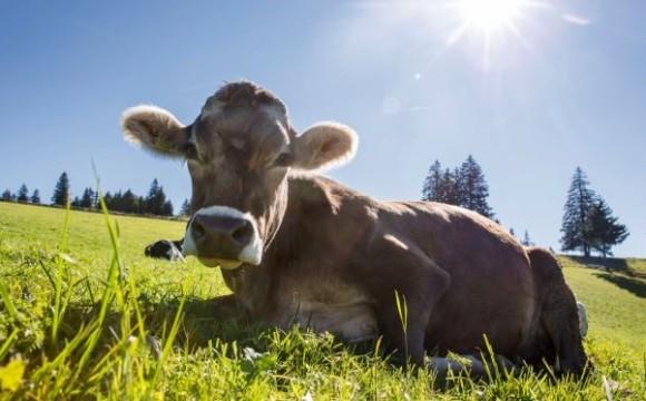 Nachhaltige Richtlinien für die Milchproduktion