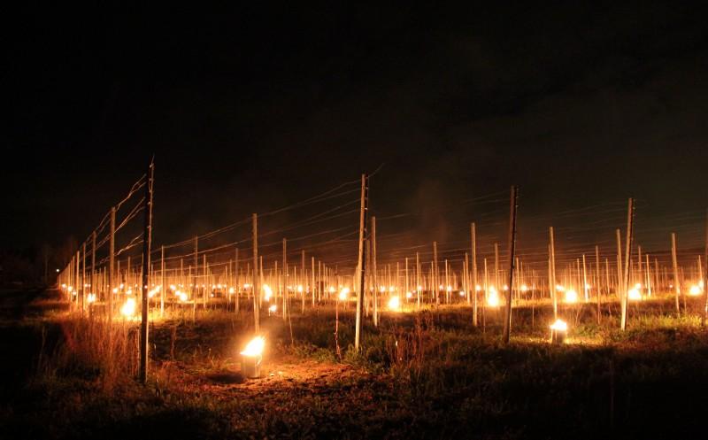 Feuer in sächsischen Weinbergen