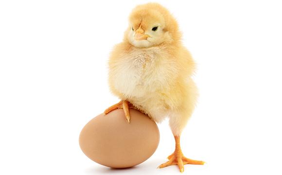 Rewe forciert Test im Ei