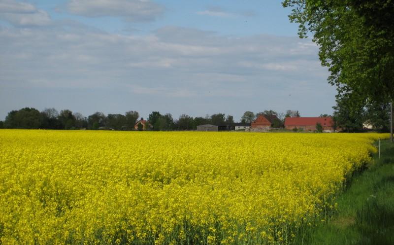 Bauernverband: Unterdurchschnittliches Erntejahr erwartet