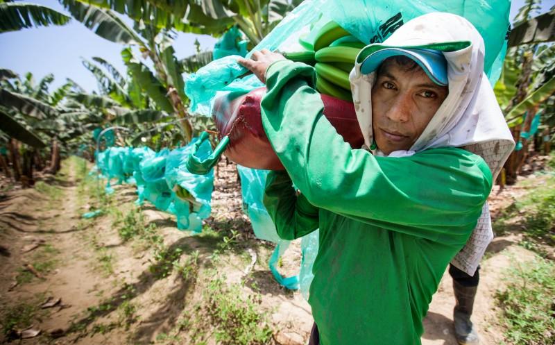 Trans-Fair: Fairer Handel auf Wachstumskurs