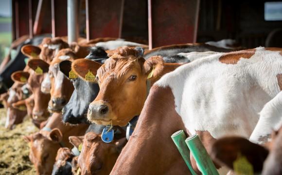 Landwirte für GVO-freie Fütterung