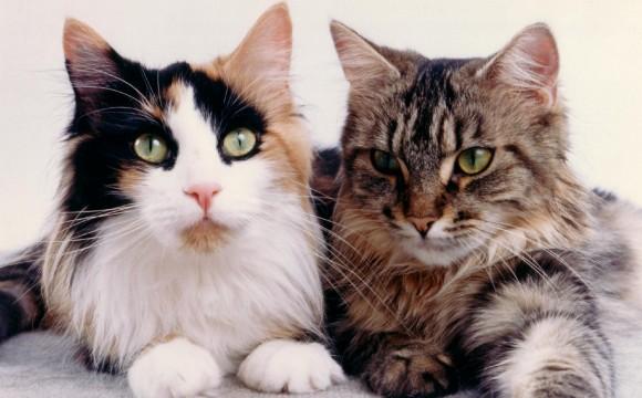 Katze ist Heimtier Nr. 1
