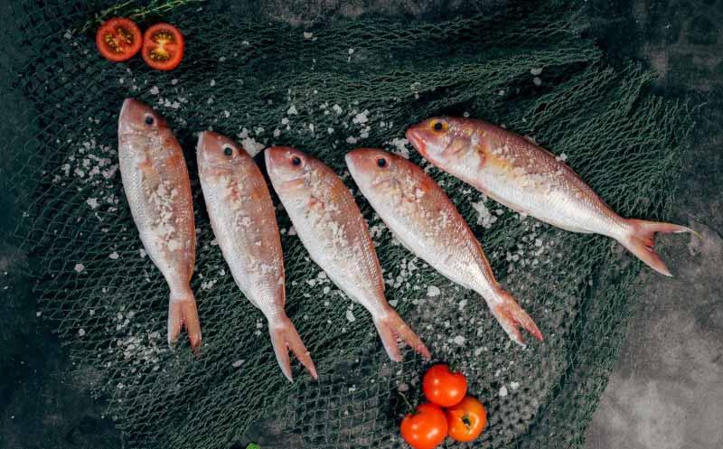 Bewussterer Fischkonsum