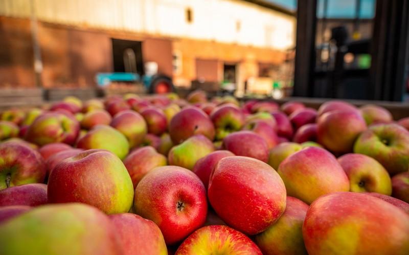 Neues Logo für Honeycrunch-Äpfel