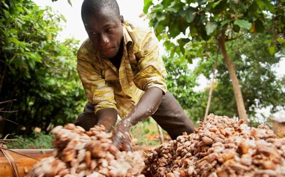 Stellt schrittweise auf Fairtrade-Kakao um