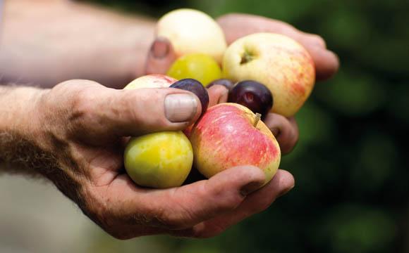 Gute Ernte, leere Fruchtsafttanks