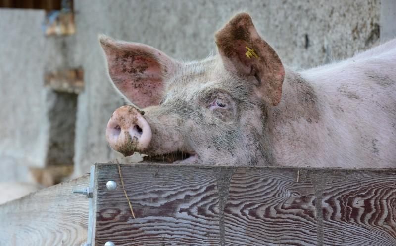 Tierwohlabgabe: 35 Euro Mehrkosten im Jahr pro Verbraucher